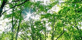 採水地近辺の山中の木々